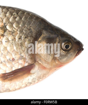head of crucian carp isolated on white background - Stock Photo
