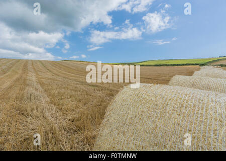 Stubble field after harvested cereal crop. Focus on lower half of image. Metaphor for food security / growing food, - Stock Photo