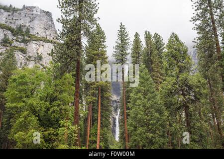 View of forest and waterfall, Yosemite National Park, California, USA - Stock Photo