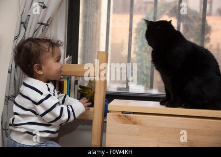 Portrait of female toddler watching cat on windowsill - Stock Photo