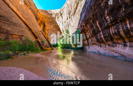 Natural Spring in Coyote Gulch Grand Staircase Escalante Utah - Stock Photo