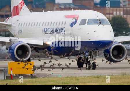 A flock of birds crosses the path of British Airways BA CityFlyer Embraer ERJ-170 registration G-LCYF as it taxis - Stock Photo