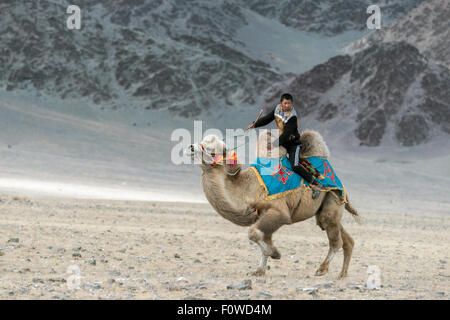 Leader in the camel race, Eagle Festival, Olgii, Western Mongolia - Stock Photo