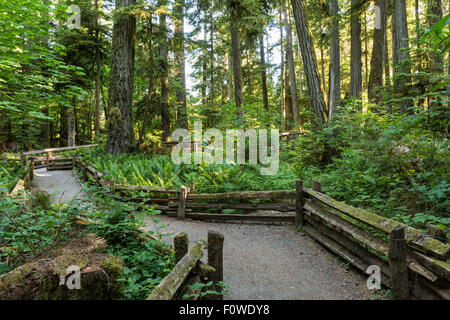 Wooden railings line the trails through Cathedral Grove in MacMillan Provincial Park, Vancouver Island, BC - Stock Photo