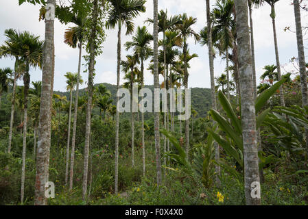 palm trees and flowers in the rainforest - Stock Photo