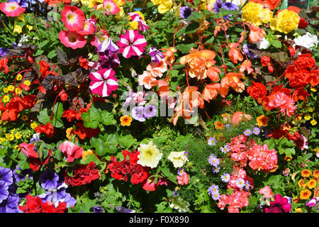 Stunning, colourful, window box in summer, Helmsley, North Yorkshire, England - Stock Photo
