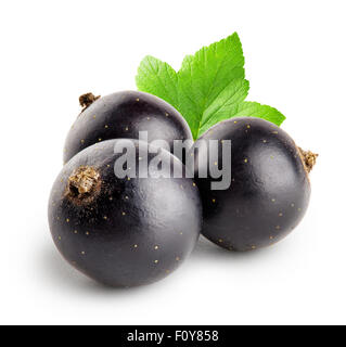 Three black currant with leaf isolated on white background - Stock Photo