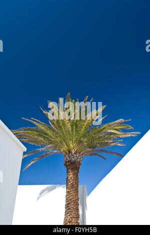 Holiday concept/Palm tree with white washed walls at various angles in private holiday vacation villa, against deep - Stock Photo