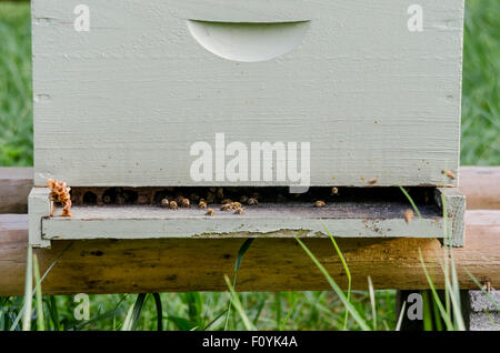 A White Bee Keeping Box With Honeycomb And Bees Wax Peeking Out