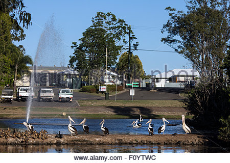 Water birds at Bundaberg botanic gardens. - Stock Photo