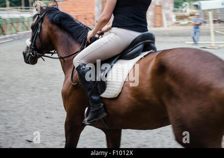 Preparation the rider dark bay horse to walking - Stock Photo