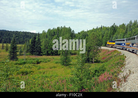 Alaska RR rounds a bend near a field of pine trees and purple fire weed near Denali National Park - Stock Photo