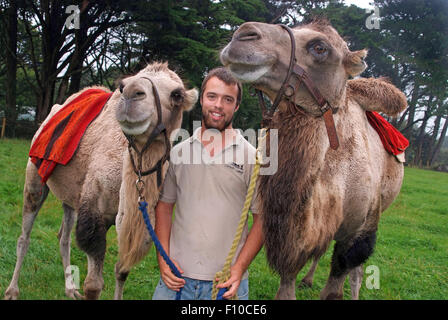 Cornwall Camels,a trekking company owned by David Oates in Helston,Cornwall,UK,which offer camel riding for the - Stock Photo