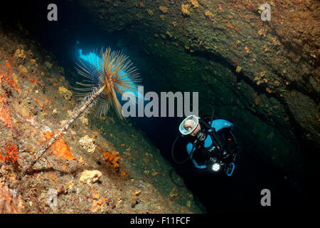 Diver in a cave with lamp, looking at a fan worm (Sabella spallanzanii), Corfu, Ionian Islands, Mediterranean Sea, - Stock Photo