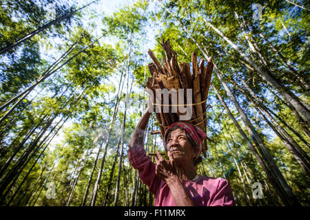 Low angle view of Asian man carrying stick bundle on her head - Stock Photo