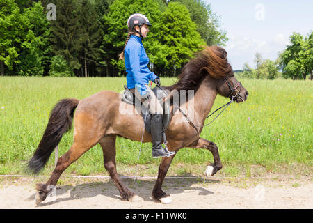 Islandic Horse Stallion rider at the toelt Austria - Stock Photo