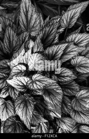 Artistic images of tropical plants - Stock Photo
