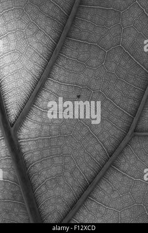 Artistic images of tropical plants closeup - Stock Photo