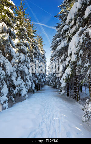 A track through a beautiful forest in winter. Photographed in the Hautes Fagnes (Hoge Venen, Hohes Venn, High Fens) - Stock Photo