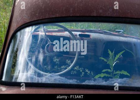 Old rusting car with plants growing inside, Bastnas car graveyard, Varmland, Sweden, June. - Stock Photo