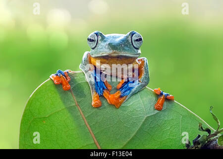 Frog sitting on a leaf - Stock Photo