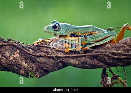 Frog sitting on a branch - Stock Photo