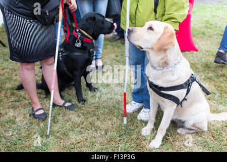 Blind people and guide dogs during the last training for the animals. The dogs are undergoing various trainings - Stock Photo