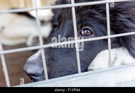 Homeless dog is being locked in a cage. - Stock Photo