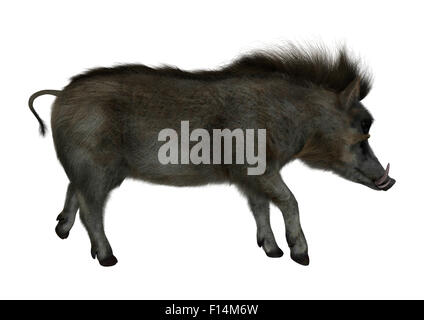 3D digital render of a wild warthog walking isolated on white background - Stock Photo
