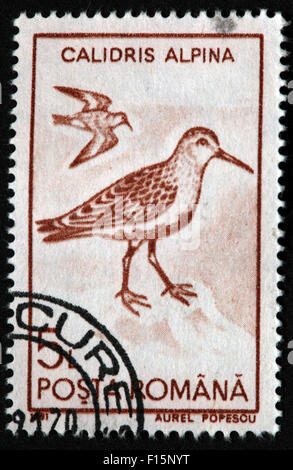 1991 Posta Calidris Alpina bird Egret Aurel Popescu brown Stamp - Stock Photo