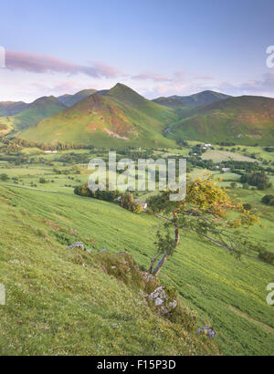 Causey Pike and the Newlands Valley from Skelgill Bank, Cat Bells, English Lake District national park - Stock Photo