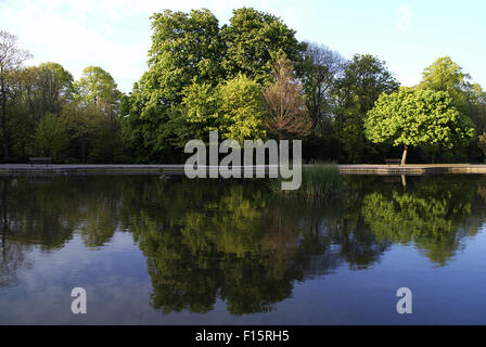 Reflection of trees on a small lake in Radnor Park, Folkestone, Kent - Stock Photo