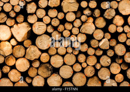 Pile of wood logs ready for winter - landscape exterior - Stock Photo