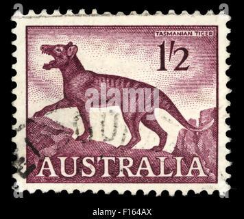 Stamp printed in Australia, shows a Tasmanian tiger (Thylacinus cynocephalus), circa 1961 - Stock Photo