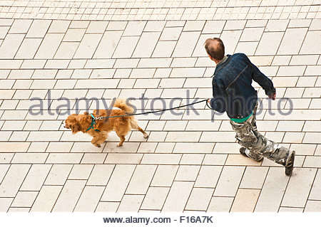 man walking the dog, viewed from above - Stock Photo