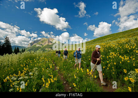 Hikers, wildflowers and Gothic Mountain (12,631 ft.), Rustler Gulch Trail, Gunnison National Forest, Crested Butte, - Stock Photo