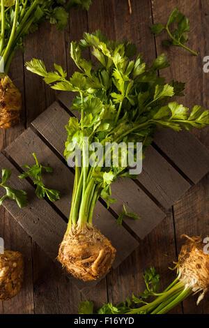 Raw Organic Celery Root Ready to Cut