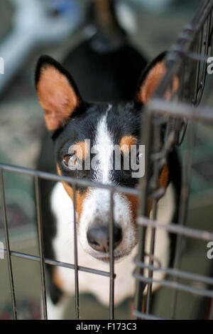 Dog in cage looking at camera point of view from above - Stock Photo