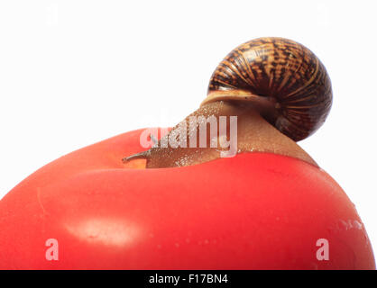 Macro shot of a snail crawling on the Apple - Stock Photo
