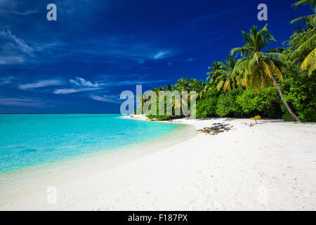 Amazing beach on a tropical island with palm trees overhanging lagoon - Stock Photo