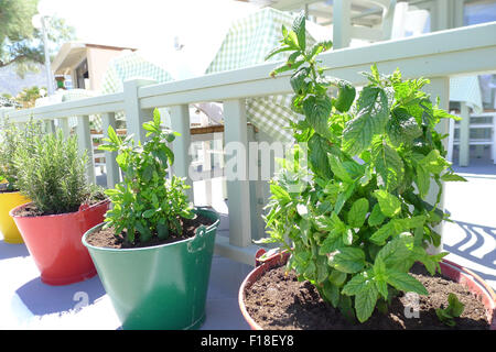 fresh herbs in colored pots - Stock Photo