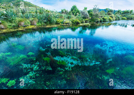 Te Waikoropupu Springs in the Nelson region in New Zealand. This is said to be one of the clearest natural waters - Stock Photo