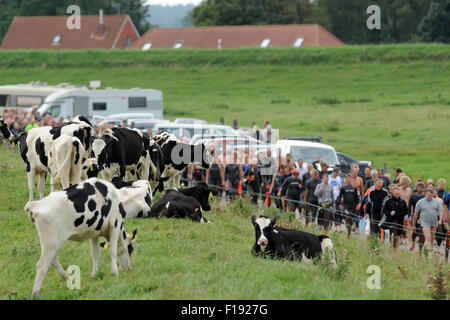 Hilgenriedersiel, Germany. 30th Aug, 2015. Swimmers on their way to the shore near Hilgenriedersiel, Germany, 30 - Stock Photo