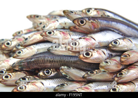 Bunch of fresh mediterranean anchovies on white background - Stock Photo