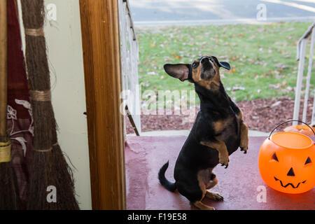 Cute Dog Trick or Treating