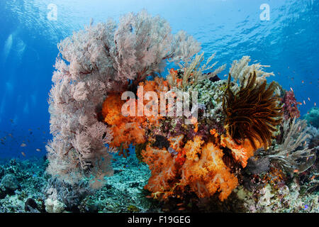 px0186-D. colorful bommie on top of reef, draped in soft corals, sea fans, crinoids, and hydroids. Indonesia, tropical - Stock Photo