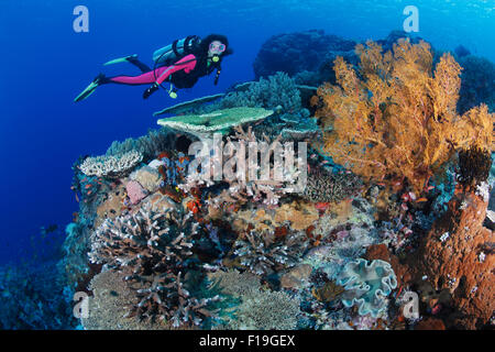 px0307-D.  scuba diver (model released) swims over healthy coral reef, with a variety of hard corals, soft corals, - Stock Photo