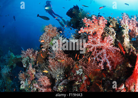 px0869-D. scuba diver (model released) soars overtop colorful, critter encrusted remains of the Liberty shipwreck - Stock Photo