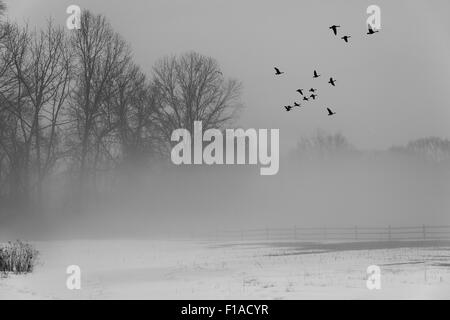 Geese Flying In Winter Sky With Fog - Stock Photo