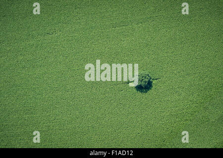 Aerial View Of Tree In Farm Field - Stock Photo